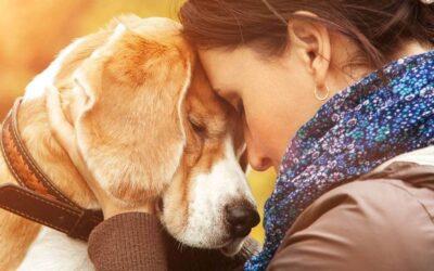 Assicurazione animali domestici: grandi vantaggi e piccoli prezzi